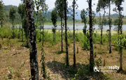 well demanding 1 acre  water frontage land for sale near Karapuzha.