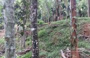 10cent  land for sale near Dwaraka.wayanad at 6.5lakh.