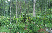 Well demanding 1 acre land near Rippon at 45lakh