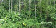 Well demanding 1 acre land near Kanthanpara at 45lakh