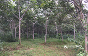 2 acre 30 cent land for sale in Kariyambadi. wayanad