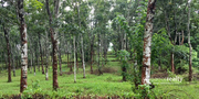 Well maintained 2.70 acre land in Nadavayal at 25lakh/acre