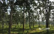 3 acre  60 cent land for sale in Naikuppa near Nadavayal .