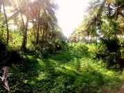 Buy Land in Greenish place for Your Beautiful Farm House