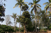 Well maintained 3 acre land  for sale in Thazhamunda.