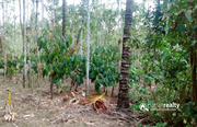 Well demanding 5 acre land for sale in Aalathoor near Pulpally.