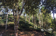 Well maintained 2 acre tea plantation for sale near Sunrise valley.
