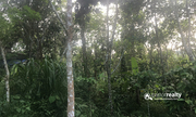 1 acre land for sale near Paplassery. wayanad