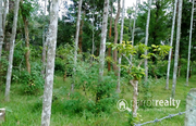 1.50 acre  water frontage land for sale in Karapuzha  .