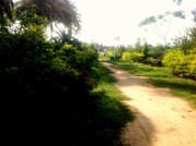 Best Opportunity to Buy Farm House In Bangalore
