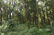 1 acre land in Mandad @ 25lakh. Wayanad