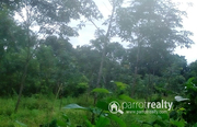 3 acre land in Nadavayal @ 22lakh/acre. Wayanad