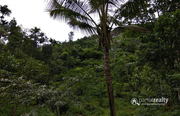 40 cent land in Kurumbalakotta @ 12lakh. Wayanad