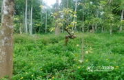 1 acre land in Moonanakuzhy @ 60lakh. Wayanad