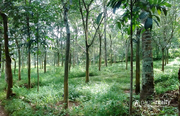 80 cent land in Cheengodu @ 48 lakh. Wayanad