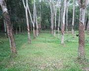 Kottarakkara Kollam rubber land for sale