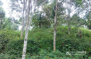 2.87 acre land @ 22 lakh/acre in Ambalavayal. Wayanad