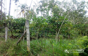 2.16 acre land @ 40 lakh/acre in Nadavayal. Wayanad