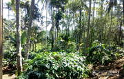 1.10 acre land @ 38 lakh in Choothupara. Wayanad