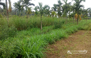 Well demanding 5 acre paddy Farm for sale in Muttil @ 80lakh. Wayanad