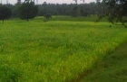7 acres of agricultural land for sale in Velanthavalam Palakkad