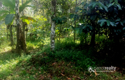 50 cent land in Nadavayal @27.50 lakh. Wayanad