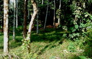 Well 25 cent land in Akg @30000/cent. Wayanad