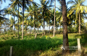2.50 acre Land with Quarry for sale in Marakadavu @35 lakh/acre.