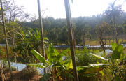 11 cent land in Cheeral @ 44000/cent. Wayanad