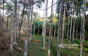 Well Demanded 1 acre land @ 40 lakh in Marakkadavu. Wayanad