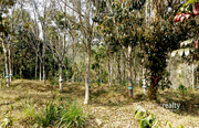 Well demanding 1.50 acre land in Kenichira @  22lakh.Wayanad