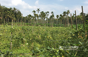 Excellent 4.10 land in Muthireri @  80lakh.Wayanad