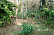 1 acre land with incomplete house in Punchavayal@  30lakh. Wayanad