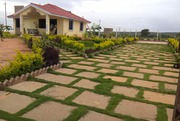 DTCP Plot With Red Sandalwood Trees. Each Plot Size 146 squar yards  n