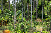 18 cent land for sale near Panamaram @ 23.40 lakh