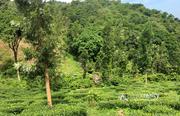 Excellent 15 acre resort purpose land near Meenmutty waterfalls, korome
