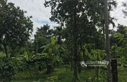 Well 2.50 acre investment purpose land near Meenmutty waterfalls