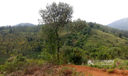 Excellent 56 cent land in Korome @ 15lakh. Wayanad
