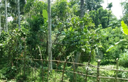 Excellent 44 cent land in Naiketty @ 26 lakh. - Land for sale