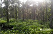1 acre 40cent land for sale in Karadippara @ 40 lakh – wayanad