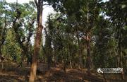 3.50 acre investment purpose land  for sale near  Padichira